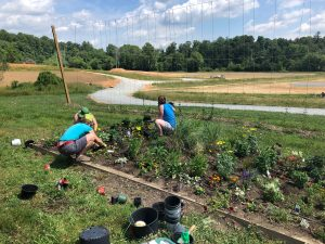Planting the landscape bed at the Mountain Horticultural Crops Research and Extension Center