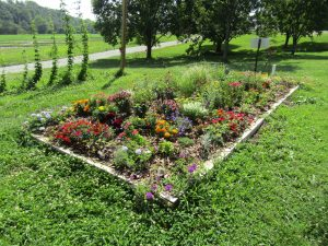 Landscape bed at the Mountain Horticultural Crops Research and Extension Center, Mills River, NC