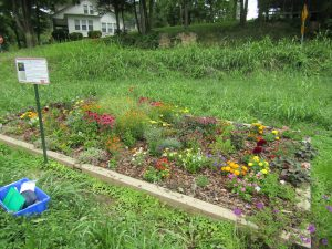 Landscape bed at the Mountain Research Station, Waynesville, NC